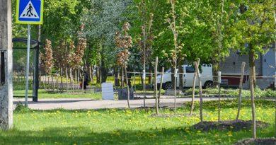 Tataristan'da 5 ayda 20 milyon adet ağaç dikildi.
