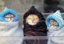 Kazan'da bugün hava soğuk olacak