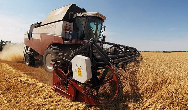 Rusya'nın tarım ürünleri ihracatı artarak 25,9 milyar dolara ulaştı