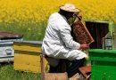 Tataristan arılarına pasaport verilecek