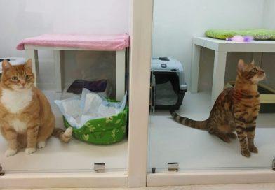 Tataristan'da hayvanlar oteli çalışmaya başladı